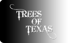 Trees of Texas Logo